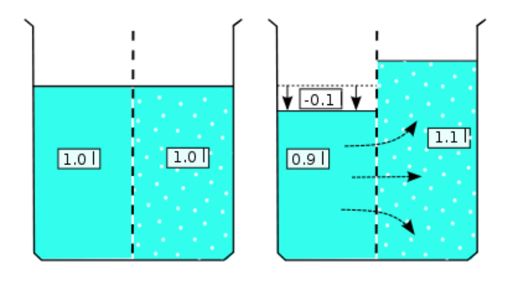 Fig.5: Fluid pressure of two different concentrations divided by a membrane (Source: Wikipedia) (c)